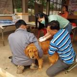 ให้บริการฉีดวัคซีนป้องกันโรคพิษสุนัขบ้าในพื้นที่เขตรับผิดชอบเทศบาลตำบลสันทราย